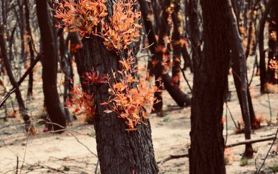 5 easy ways corporates can help cut the cost of the 2019-20 bushfires
